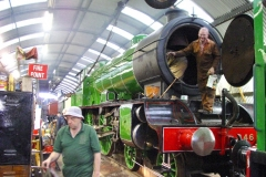 Morayshire_in_romney_shed
